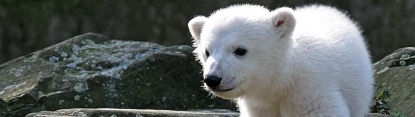 Knut on kuollut
